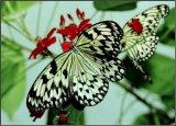 flutterbys