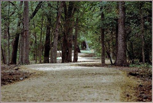 bracken trail