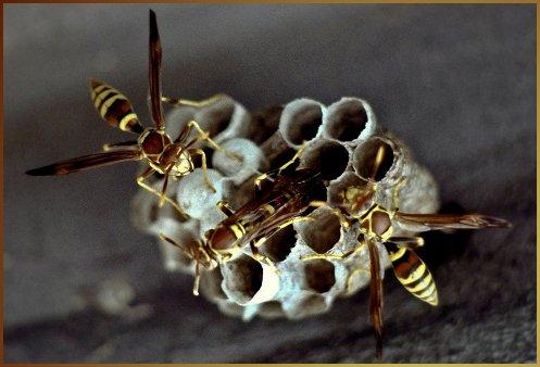 hornetNest