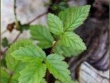 05/25/2009 poison ivy