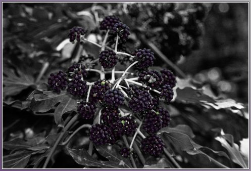 berries_post