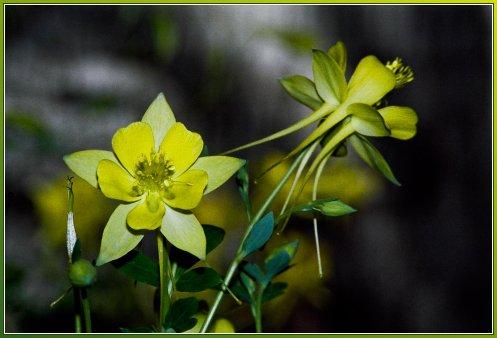 yellow-1-3